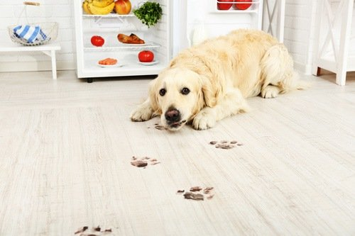 Are You Thinking About Buying Vinyl Flooring?