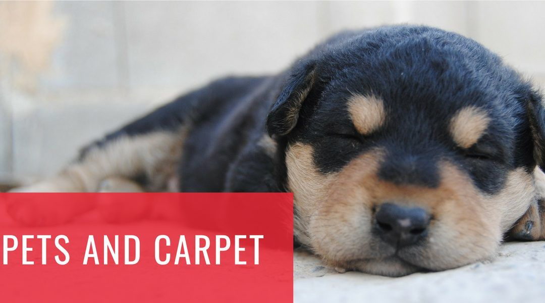 Pets and Carpet
